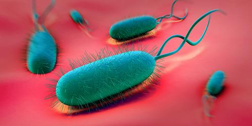 Helicobacter Pylori OncoFort